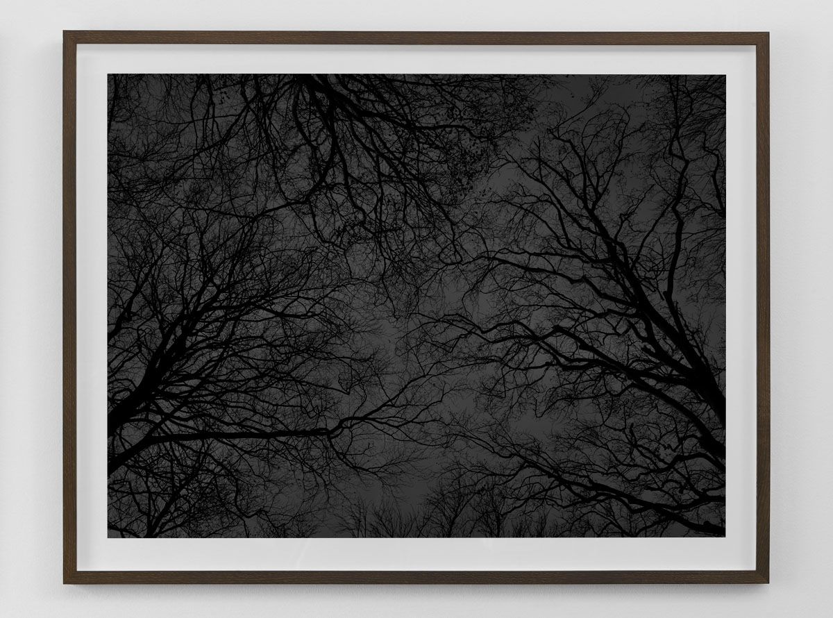 Black and white fine art photography print of bare trees against the sky framed in smoked oak size 80×103 cm