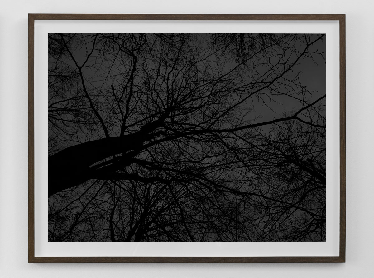 Black and white fine art photography print of bare trees against the sky framed in smoked oak size 80×103 cm nr 3