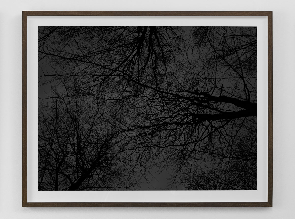 Black and white fine art photography print of bare trees against the sky framed in smoked oak size 80×103 cm nr 4