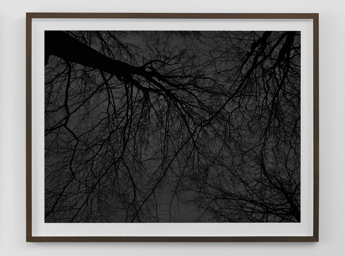 Black and white fine art photography print of bare trees against the sky framed in smoked oak size 80×103 cm nr 2