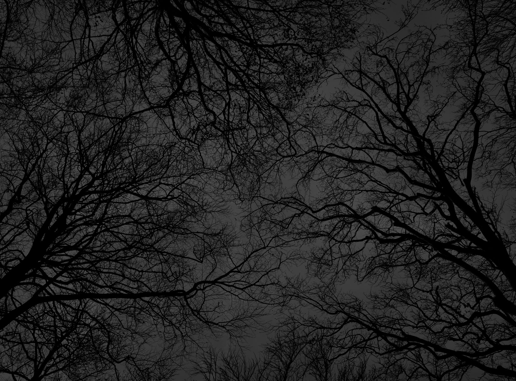Dark black bare trees 04