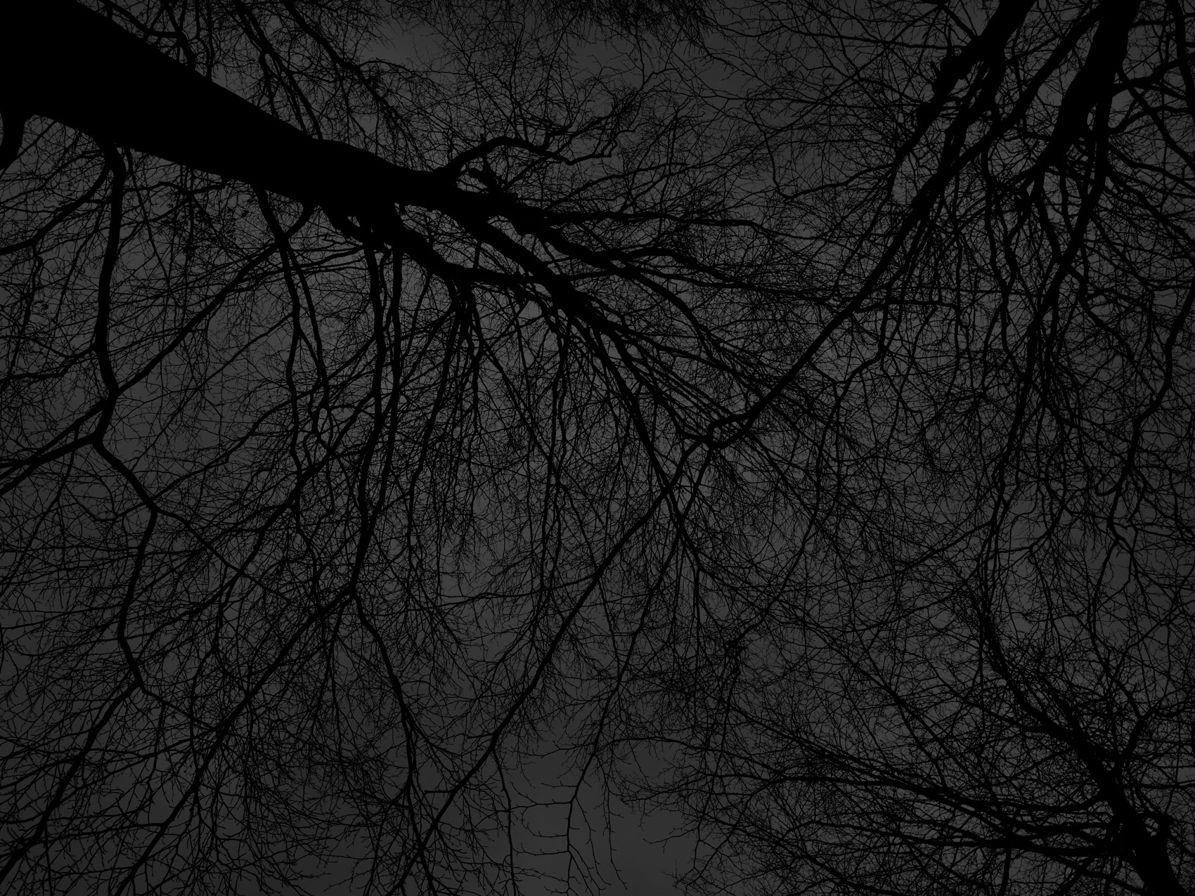 Dark black bare trees 03