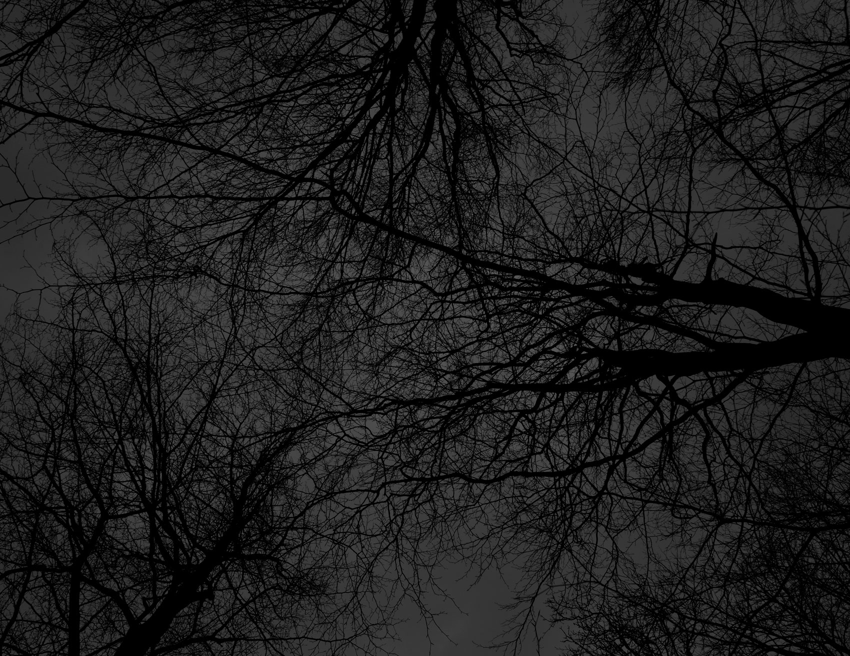 Dark black bare trees 01