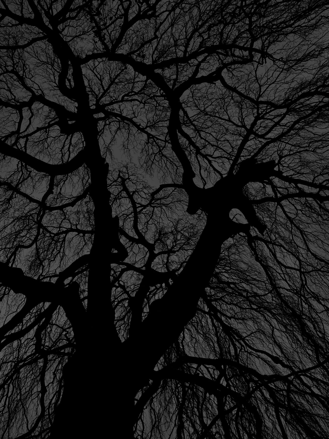 Dark black bare trees 07