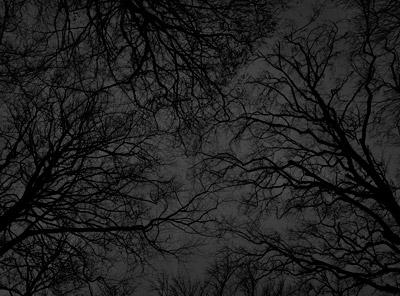 Læs om fotoserien Black Forest af fotograf Kenneth Rimm her